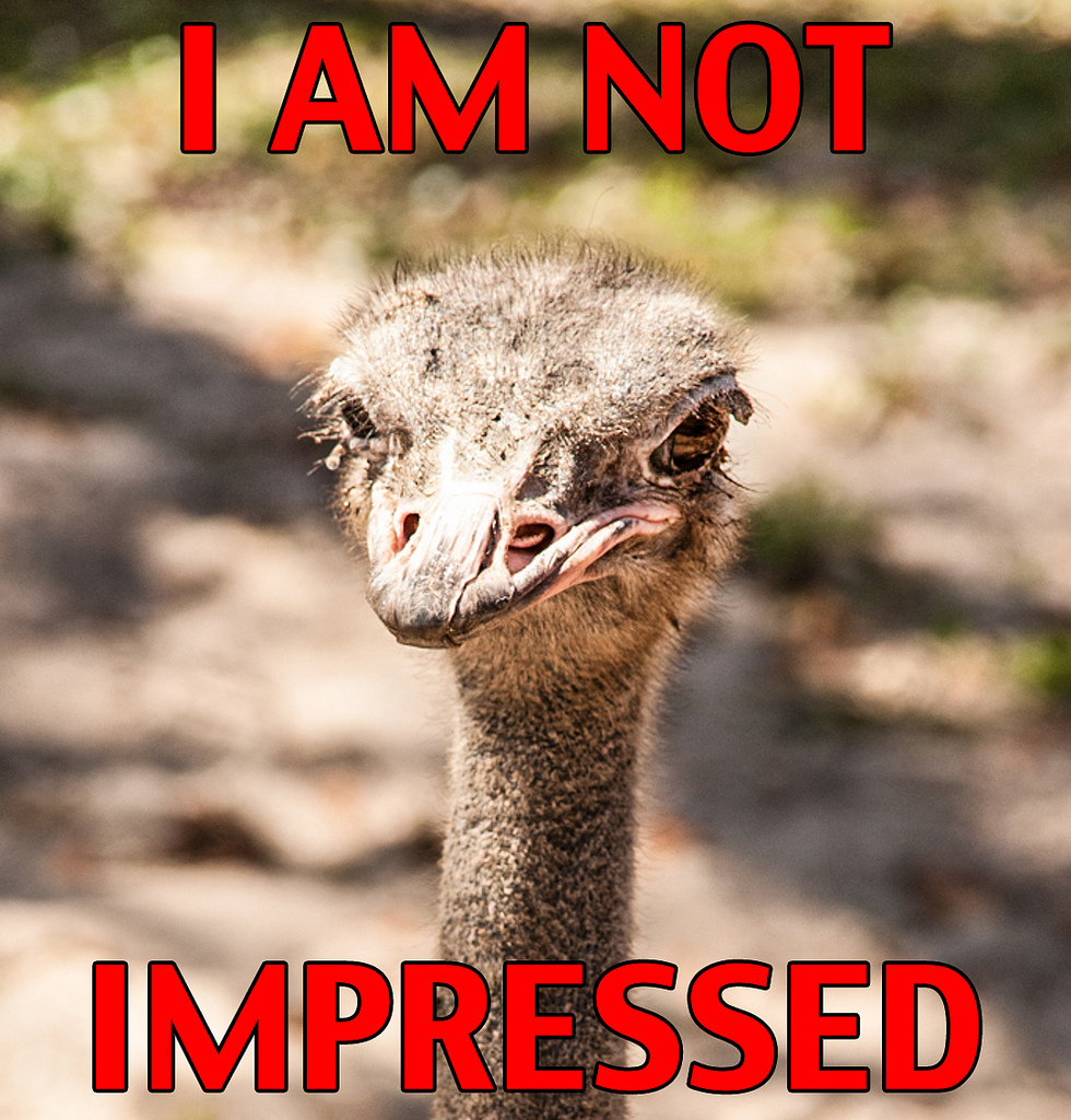 ostrich saying it's not impressed