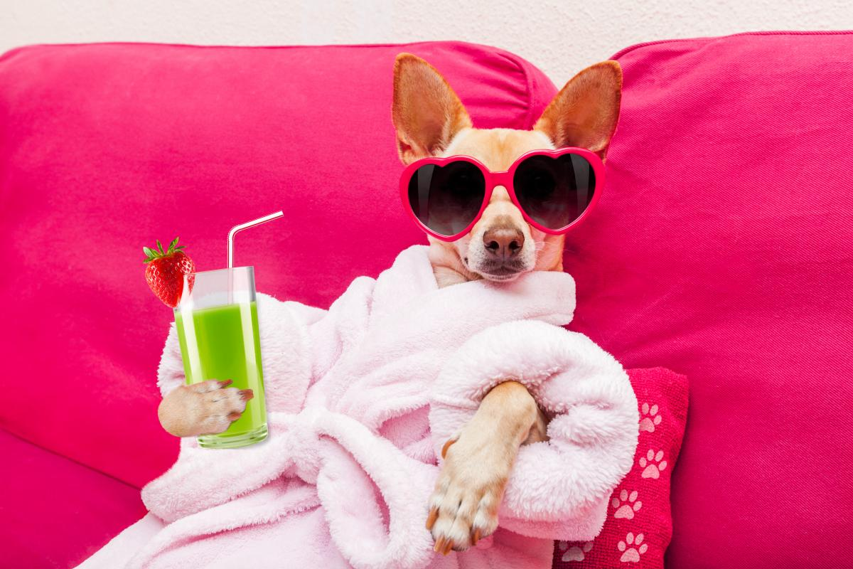 dog in sunglasses and robe